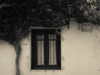 Tree in Front of a House, Colonia Del Sacramento, Uruguay Photographic Print