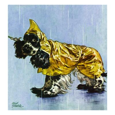 """Butch in Raingear,"" April 2, 1949 Giclee Print by Albert Staehle"