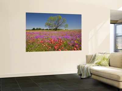 Spring Mesquite Trees Growing in Wildflowers, Texas, USA Wall Mural by Julie Eggers