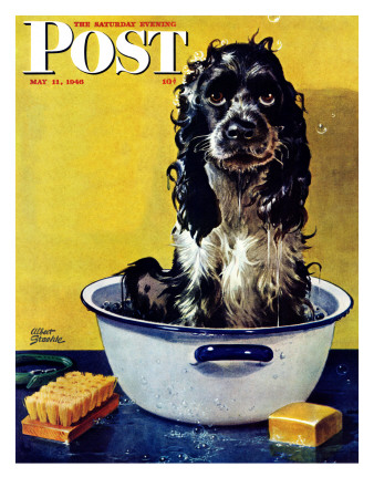 """Butch Gets a Bath,"" Saturday Evening Post Cover, May 11, 1946 Giclee Print by Albert Staehle"