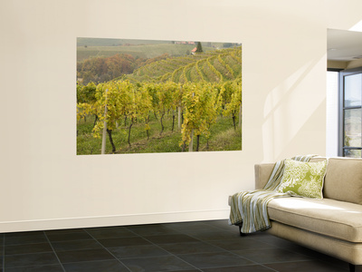 Vineyard Wall Mural by Richard Nebesky