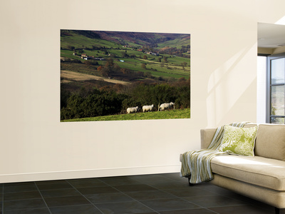 Fields and Farm, North York Moors National Park Wall Mural by Doug McKinlay