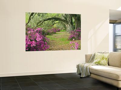 Oak Trees Above Azaleas in Bloom, Magnolia Plantation, Near Charleston, South Carolina, USA Wall Mural by Adam Jones