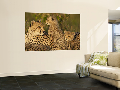 Cheetahs, Upper Mara, Masai Mara Game Reserve, Kenya Wall Mural by Joe & Mary Ann McDonald