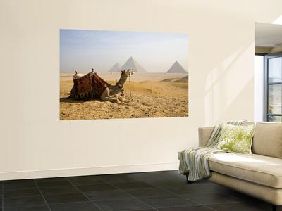 Lone Camel Gazes Across the Giza Plateau Outside Cairo, Egypt Wall Mural by Dave Bartruff