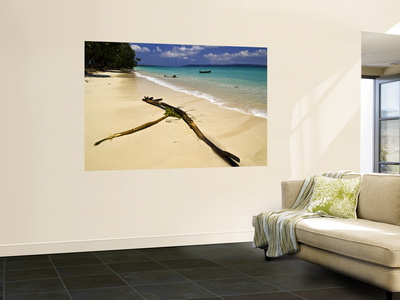 Driftwood on Deserted Beach Wall Mural by Paul Harding