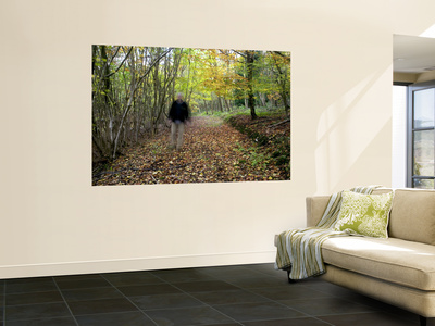 Autumn Stroll in a Home Counties Wood, North Downs Wall Mural by Doug McKinlay