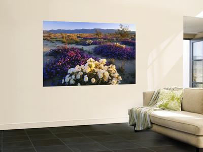 Flowers Growing on Desert, Anza Borrego Desert State Park, California, USA Wall Mural by Adam Jones