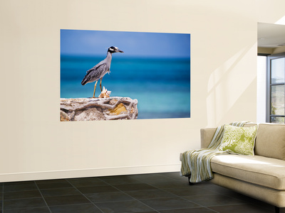 Adult Yellow-Crowned Night-Heron at Barracuda's, Cape Eleuthera Wall Mural by Michael Lawrence
