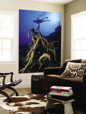 Diver Silhouette over Reef with Large Stand of Scattered Pore Rope Sponge Wall Mural by Michael Lawrence