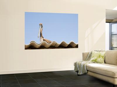 Pelican on Roof. Wall Mural by Sabrina Dalbesio