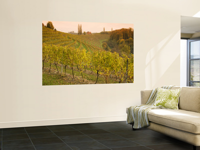 Vineyard in Jeruzalem Wine Region Wall Mural by Richard Nebesky