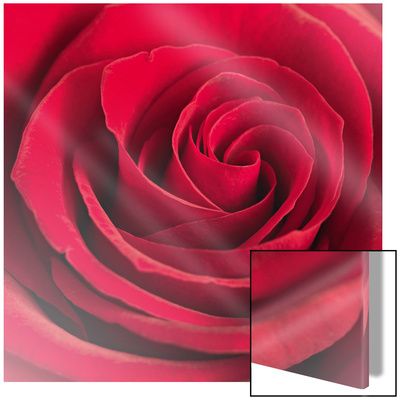 Red Rose Glamorous Art on Glass