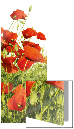 Red Poppies Art on Glass