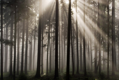 Austria Forest Light Photographic Print by Charles Bowman