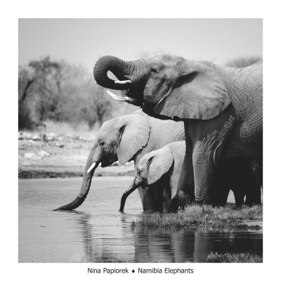 Namibia Elephants Reproduction d'art
