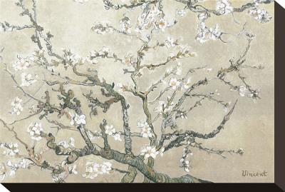 Amandeltakken in bloei, Saint-Remy, ca. 1890 Kunst op gespannen canvas van Vincent van Gogh
