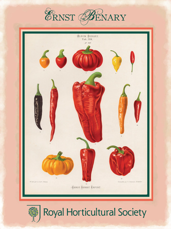 Ernst Benary Pepper Tin Sign