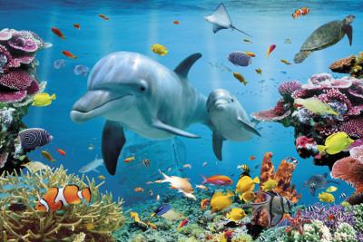 Tropik Okyanusta Denizaltı Poster
