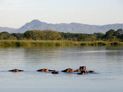 Malawi, Upper Shire Valley, Liwonde National Park Photographic Print by Mark Hannaford