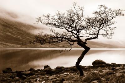Loch Etive Art by Danita Delimont