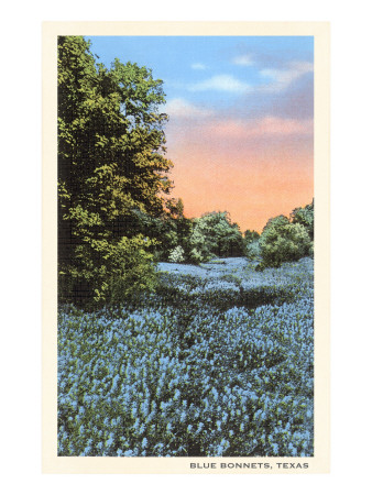 Field of Bluebonnets, Texas Premium Poster