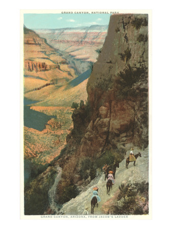 Pack Animals on Trail in Grand Canyon Poster