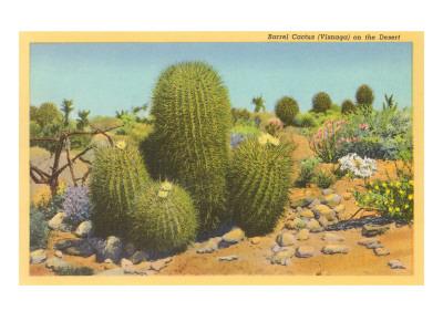 Barrel Cactus Prints