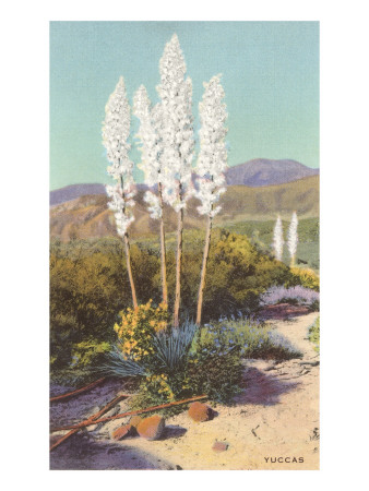 Yuccas in Bloom Art