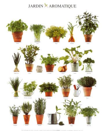 Giardino delle erbe aromatiche, in inglese Stampe su ...