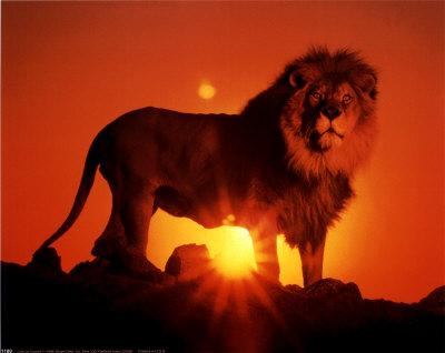 Liste Animaux et Significations  Kimball-ron-lion-au-coucher-du-soleil