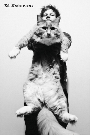 Ed Sheeran-Cat Affiche