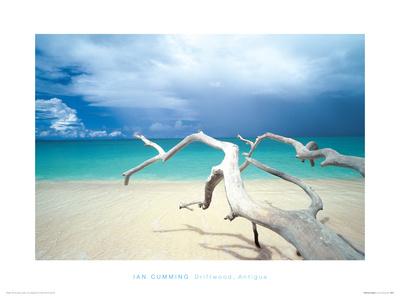 Driftwood, Antigua Giclee Print by Ian Cumming