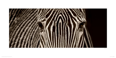 Zebra Grevy reproduction procédé giclée