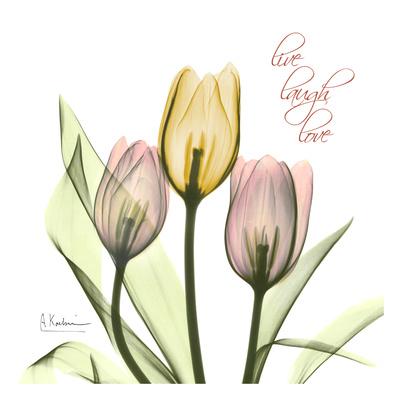 Easter Bonnet I Tulips Prints by Albert Koetsier