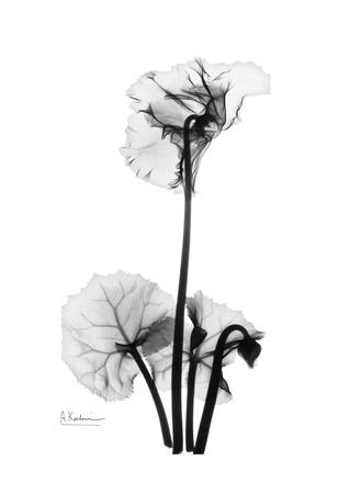 Cyclamen in Black and White Print by Albert Koetsier