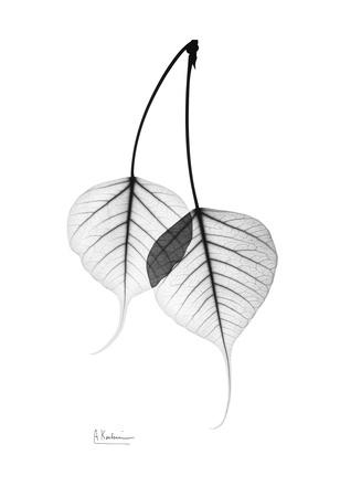 Bodhi Tree Leaves in Black and White Poster by Albert Koetsier