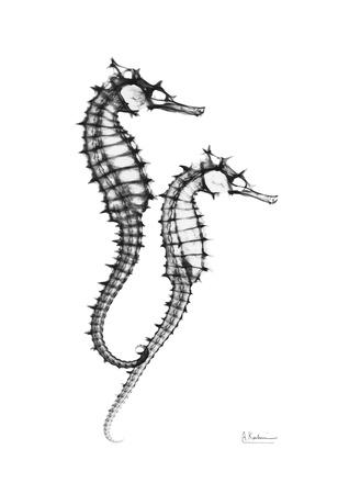 Sea Horse Twins Kunstdrucke von Albert Koetsier