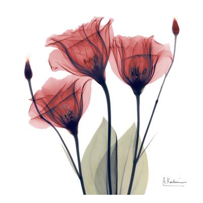 Gentian Trio in Red Art by Albert Koetsier