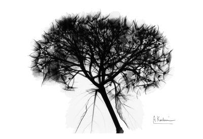 Hydrangea Bunch in Black and White Posters by Albert Koetsier