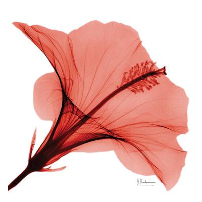 Close Up of Red Beauty II Print by Albert Koetsier