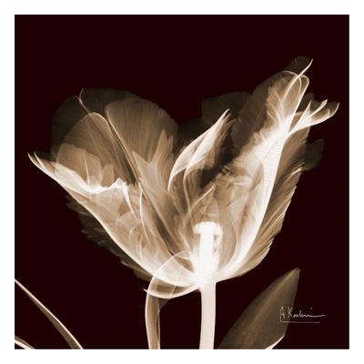 Tulip on Brick Prints by Albert Koetsier