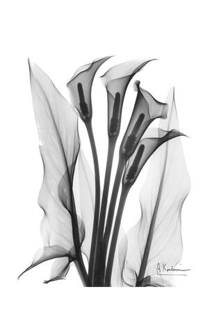 Calla Lily Quad in Black and White Print by Albert Koetsier