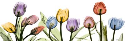 Colorful Tulip Scape Kunstdrucke von Albert Koetsier