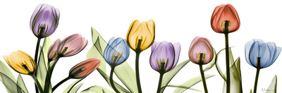 Colorful Tulip Scape Poster by Albert Koetsier