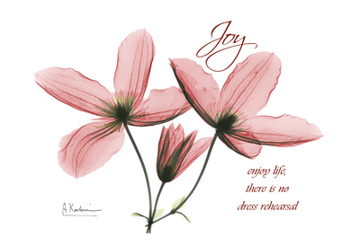 Clematis, Joy Art Print