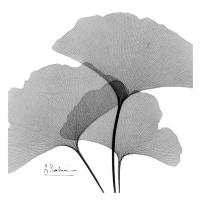 Ginkgo Leaves Trio Black and White Prints by Albert Koetsier