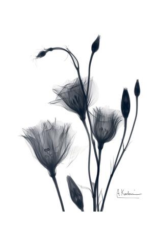 Bouquet of Gentian in Black and White II Print by Albert Koetsier