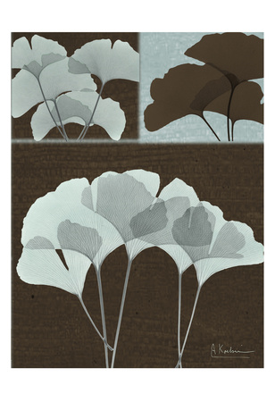 Ginkgo Blue on Brown Poster by Albert Koetsier