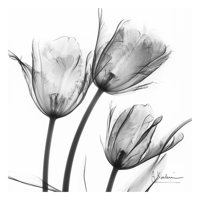 Three Tulips in Black and White Posters af Albert Koetsier